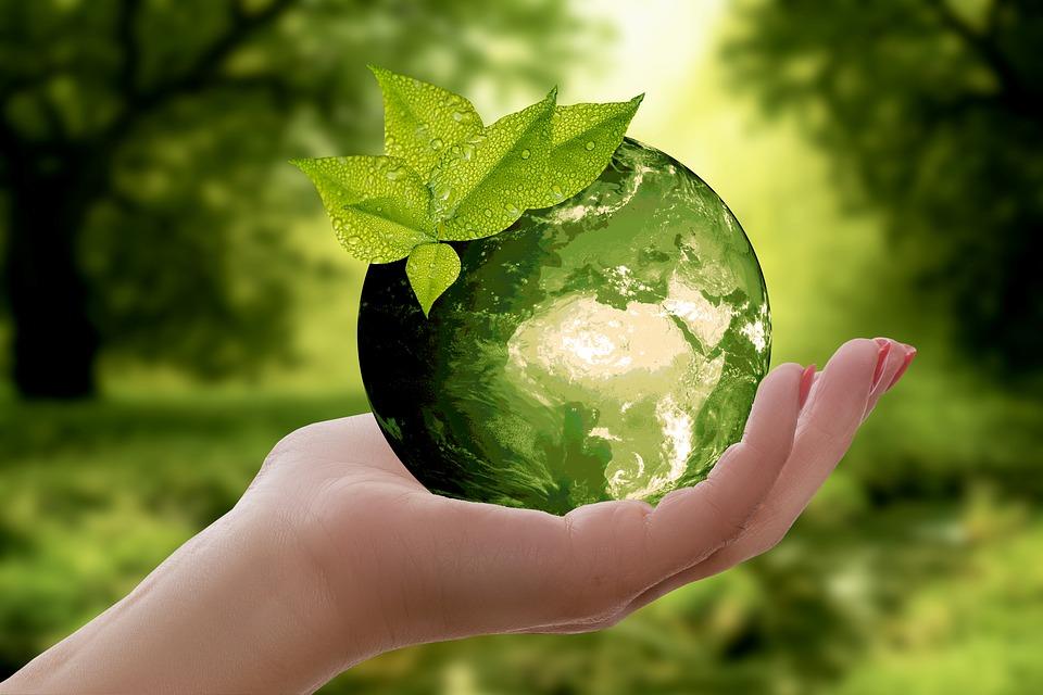 sustain globe forest